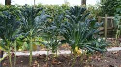 palmkook